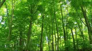 【瞑想音楽】 リラックスできる森のBGM