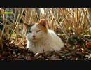 じっとしたままの三毛猫