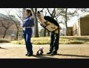 【ようこそ!】ササクレパンダ踊ってみた【ジャパry】