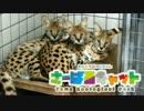 多摩動物公園のサーバル