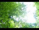10分間シリーズ 第25弾 スマブラX 「209番道路」 thumbnail