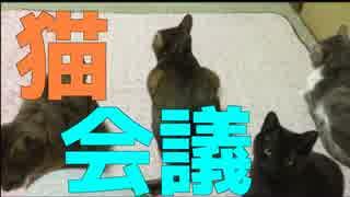 【かわいい】新人猫を加えた猫会議を開く猫達!【新入社員】