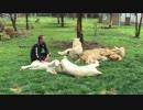 ネコ科の猛獣たちが暮らす施設
