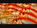 【NNI】Fish Festival【オリジナル】