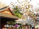 【桜前線便り】靖国神社の桜[桜H29/4/5]
