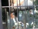【閲覧注意!】モモアカノスリの怖くてエグい食事(上野動物園)