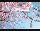 桜坂を歌ってみた