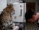 サーバルちゃんの猫パンチ!