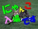 【主声有り】横浜スタジアムでにゃんこ入場(2017.4.13 DeNAvs阪神)【野球】