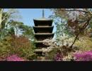 京都 仁和寺に行ってみた