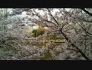 桜と中央線(2017年4月)