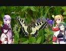【ゆかマキ東北姉妹で】  アゲハ蝶  【ボイロとボカロでカバー】
