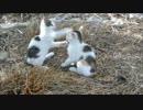 相手の顔面に猫パンチでクリーンヒットを喰らわせる子猫