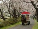 【ゆっくり】徒歩で日本一周part46【奥州→北上】