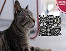 第48位:沖縄県奥武島の過激派活動家の実態をとらえた! thumbnail