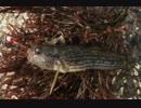 第70位:釣り動画ロマンを求めて 44釣目(深浦湾)