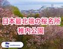 【桜ドローン】日本最北端の桜名所「稚内公園」