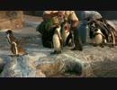 【東武動物公園】5/20ペンギントークの後のグレープ君ごはん