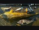 第21位:能登釣りしまっしま!16話 ルアーでマゴチ
