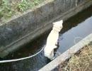ワンコ「ほどよい水量具合だぜ」