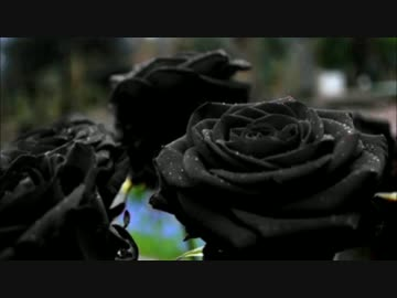 Black rose nicozon black rose voltagebd Choice Image