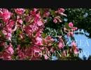 Yasuha. - Azalea (Original Mix) Music Video【Melodic Progressive House】Free Download