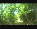 【ハイキング】長尾峠~芦ノ湖スカイライン入口~湖尻⑦【往路】