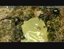 トゲトゲ トゲアリ