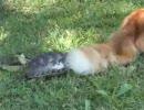 亀と猫のじゃれ合い