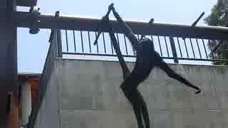 手足と尻尾を起用に使うクモザル(桐生が岡動物園)