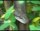 木の上でヘビが涼んでいた