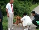 蓮舫、犬に逃げられる