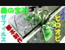 森の宝石(蝶)を標本にしてみた!【展翅/雑談/制作動画】