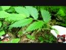 ゆっくりの田舎と自然 第14話「畑の食べもの」
