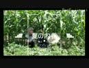 【刀剣乱舞】燭台切光忠と乱藤四郎の夏の内番【コスプレ動画】