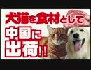 殺処分される犬猫を食材として中国に出荷!!