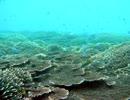 EPO 海の中でないたなら(たったひとつの地球フル)