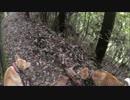 狩猟 猟犬とゆく猪猟 夏の散歩編