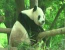 世界三大珍獣【上野動物園】