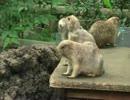 第28位:挨拶しまくるプレーリードッグ【上野動物園】 thumbnail