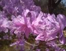 【歌ってみた】SEKAI NO OWARI 「RAIN」 【メアリと魔女の花】
