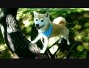 笑顔でモデルポーズを連発する柴犬いちご
