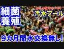 【韓国のプールが汚すぎる】 9カ月間も水交換無し!手抜きで細菌天国!