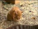 「ウシシ先生と観る世界ネコ歩き 」part6 ウシシ(生放送主)