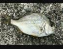 釣り動画ロマンを求めて 72釣目(小坪漁港)