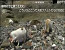 「ウシシ先生と観る世界ネコ歩き 」part13 ウシシ(生放送主)