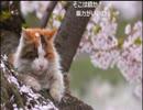 「ウシシ先生と観る世界ネコ歩き 」part14 ウシシ(生放送主)