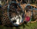 「ウシシ先生と観る世界ネコ歩き 」part16 ウシシ(生放送主)