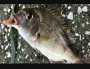 釣り動画ロマンを求めて 75釣目(八景島 周辺)