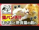 【まさおの日常】猫パンチ!!まさおと野良猫の戯れ